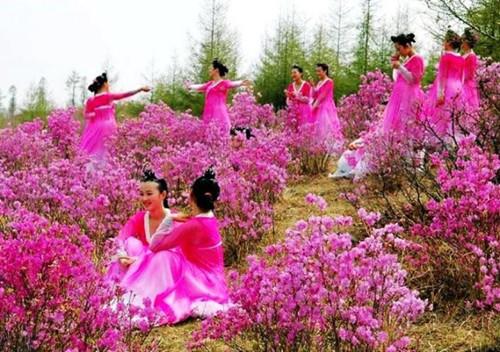 朝鲜国花-—杜鹃