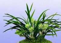 春兰花的养殖方法