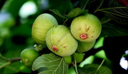 无花果栽培方法与养护管理