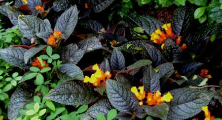 金红花的繁殖方式