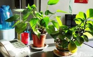办公室不宜养什么植物?