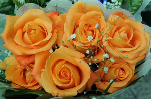 橙玫瑰的花语是什么(图)