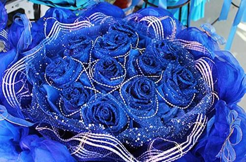 99朵蓝色妖姬代表什么意思(图)