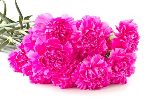 康乃馨花束的养护(图)