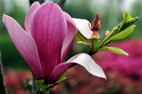 春天开花的植物有哪些 哪些植物春天开花(图)