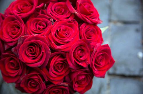 玫瑰花怎样保存时间长 鲜玫瑰怎