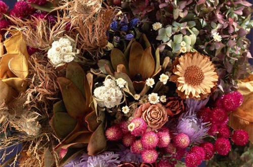 鲜花怎么做成干花 如何将鲜花做成干花(图)