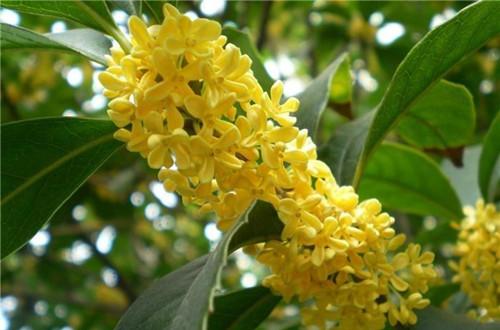 花期长又容易养的花有哪些(图)