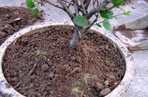 从路边挖的土能养花吗 养花的土