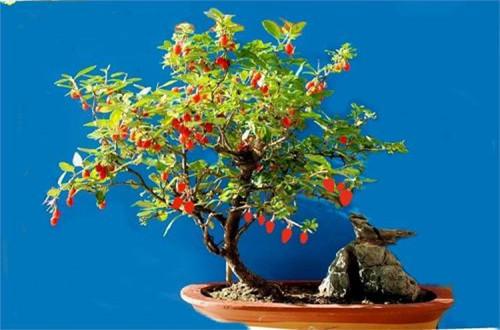 家养喜阳的盆栽植物有哪些 家养