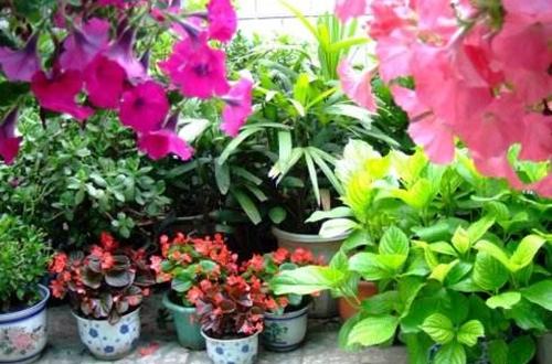 <b>养花通用的杀虫剂有哪些 哪种比较好用(图)</b>