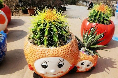 仙人球怎么种植 仙人球种植方法