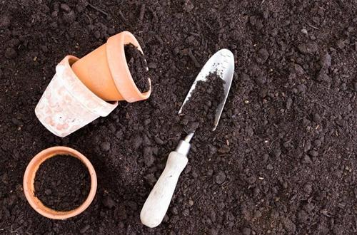 花盆土壤消毒用什么药 土壤杀菌