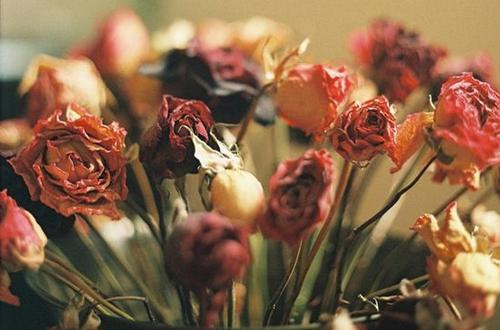 玫瑰干花怎么做 玫瑰干花制作方法图解