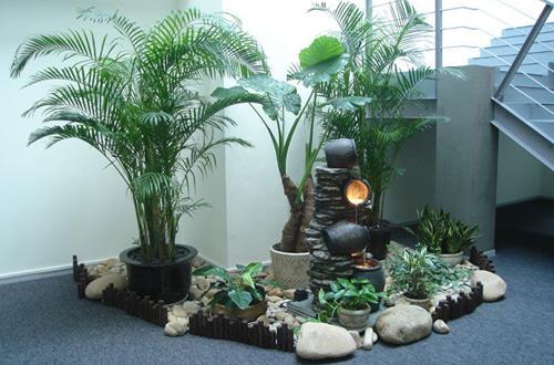 走廊适合摆放什么植物呢 哪些植物是不宜摆放在走廊(图)
