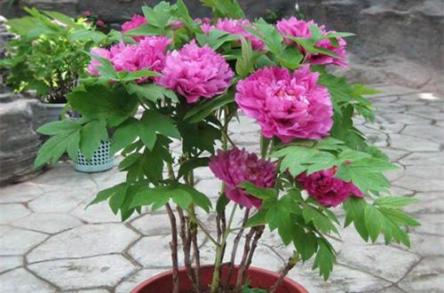 有一些花,冬前低温的春化有利于开花,切记不要急于移入室内!