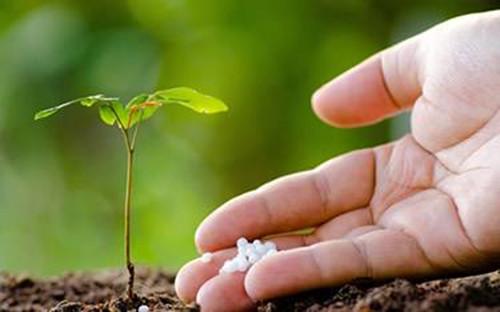 花卉植物施肥方案,只要方法对,植物自然长得好