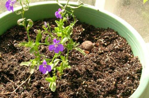 养花旧土不要扔,自己在家简单处理变新土,照样可以养花!