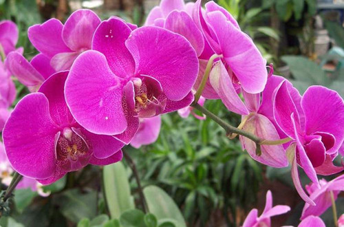 冬天家里养这几种花,从冬开到春,好养又好看!