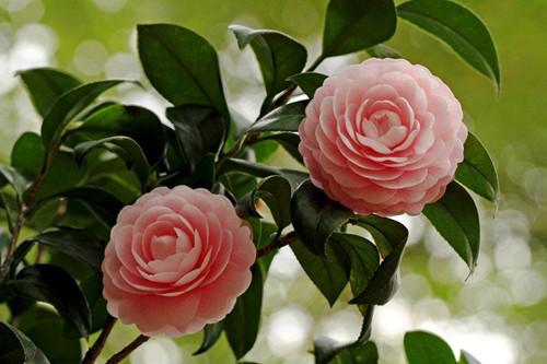 春天你给花施肥吗?别错过这季节,做好了,啥花都能长得好!