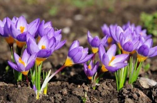 适合北方庭院种植的花卉有哪些?看看这几种推荐!
