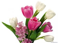 郁金香花语是什么