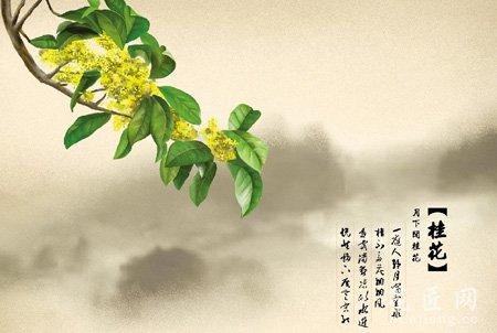 月亮里的桂花树图片
