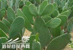 墨西哥健康美食仙人掌