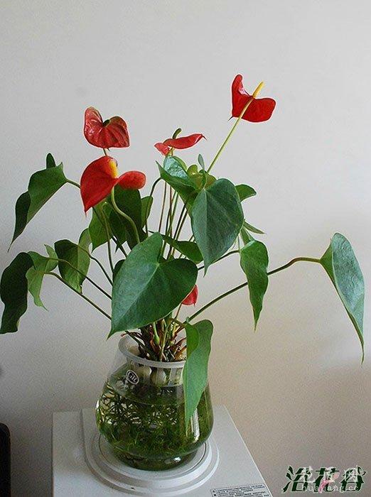 花店买花的一些经验教训总结