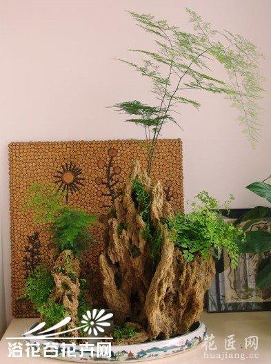亲手教你制作山水植物盆景