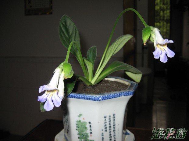花市购花和缓苗注意事项