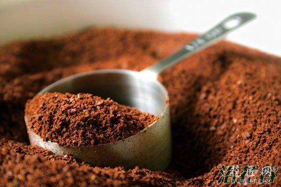 咖啡渣养花做肥料
