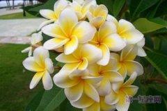 【国花大全】世界各国的国花是什么?