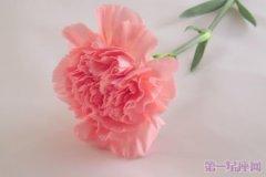 母亲节:康乃馨花语解析