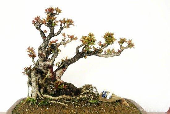 树桩的挖掘与养护