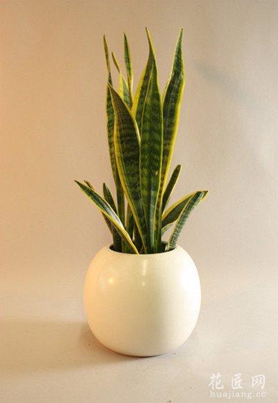 推荐三大室内排毒植物 发布时间:14-04-16 随着气温的回升,人们进入了家中购入花卉绿植的高峰时期。挑选植物盆栽为绿