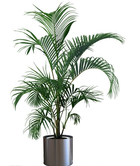 夏季室内适合摆放什么植物? 发布时间:14-04-02 在炎热的夏天,绿色植物能给人清凉的感觉,不少市民也会选择一些植物