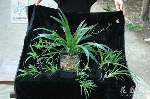 冬季教你养盆浓绿的水培植物