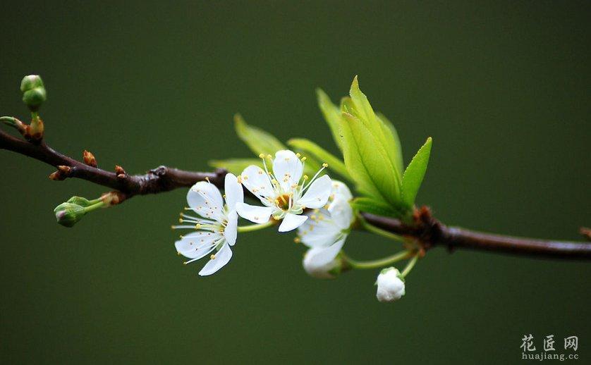 家养植物缺少某种元素时表现出的一些症状 发布时间:14-04-03 在家庭养花时候有的花会偶尔的出现某些不是病虫害的病因