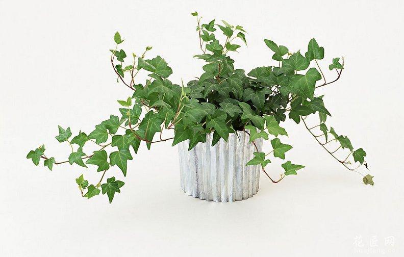 餐厅放什么植物合适 发布时间:14-04-03 宜:餐厅置放有益植物 餐厅是家人团聚的地方,而且位置靠近厨房,浇水便利。