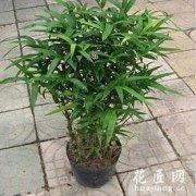 卫生间适合摆放净化空气植物
