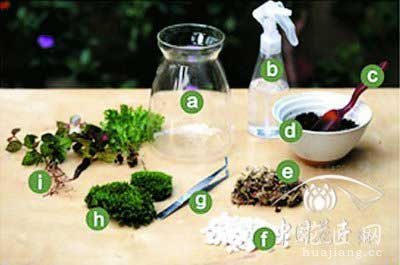 苔藓微景观制作教程——1.准备材料