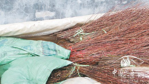 用生根粉配制的溶剂浸泡枝条,可促进生根。