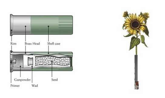 花种子弹示意图