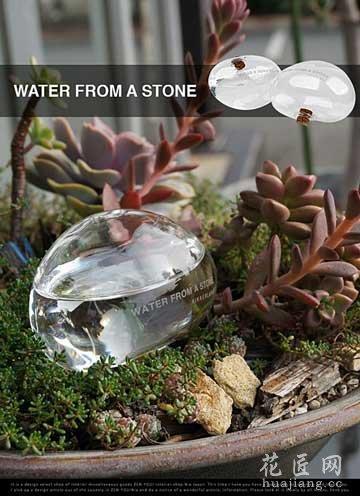 透明石头浇水器:Water From A Stone 花草树木网发表于2013年12月05日17:12:16 | 养花草