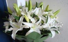 百合朵数花语大全,不同朵数百合的含义