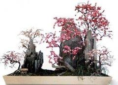 梅花盆景养护