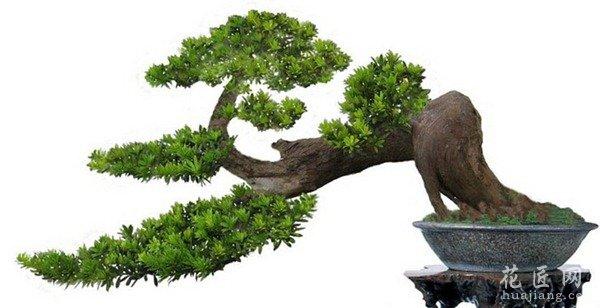 造型植物立面ps素材