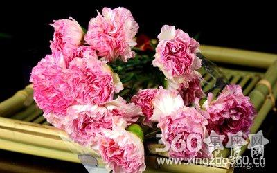 29朵康乃馨的龙都娱乐是什么?