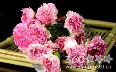 29朵康乃馨的花语是什么?